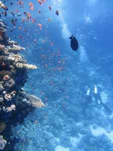 divers-underwater-ocean-swim-68767.jpeg
